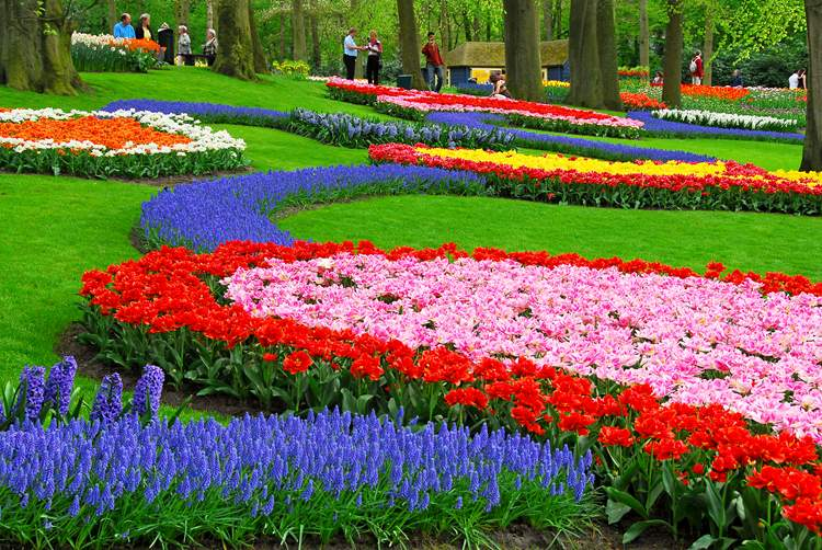 One Day Trip to Keukenhof 7 April